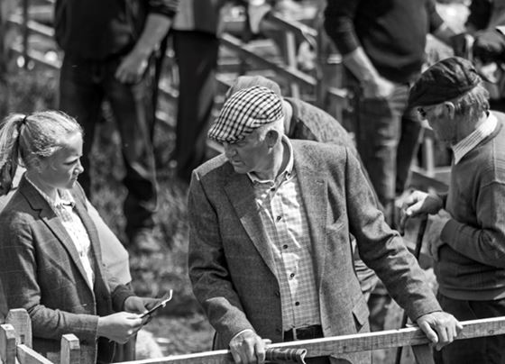 Granddaughter and granfather discuss the entries at Tan Hill Swaledale sheep show.